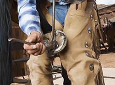 Casqueamento e Ferrageamento de Equinos