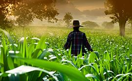 CPT Adubação Grandes Culturas - Software para Adubação de Custo Mínimo e Recomendação do Plantio à Colheita para Grãos, Fibrosas, Oleaginosas, Pastagens, Forrageiras e Florestas
