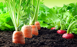CPT Adubação Hortaliças - Software para Adubação de Custo Mínimo e Recomendação do Plantio à Colheita