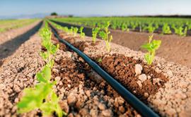 Software CPT: CPT Microaspersão e Gotejamento - Software para Elaboração de Projetos de Irrigação por Microaspersão e Gotejamento