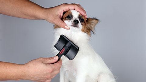 Tosador de Cães e Gatos