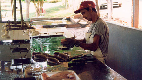 Processador de Carne de Peixes