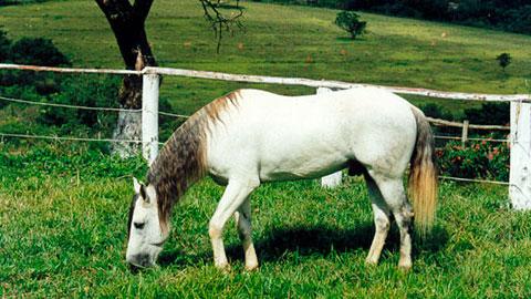 Criador de Cavalos