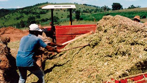 Produtor de Milho