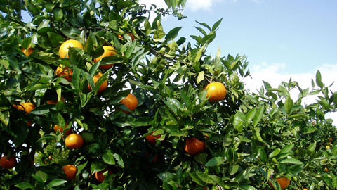 Produtor de Frutas
