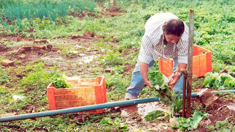 Horticultor