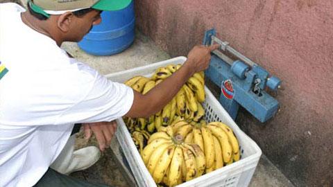 Produtor de Frutas e Vegetais Desidratados