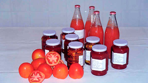 Processador de Tomate