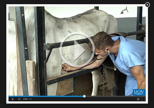 Auxiliar Veterinário - Equinos e Bovinos