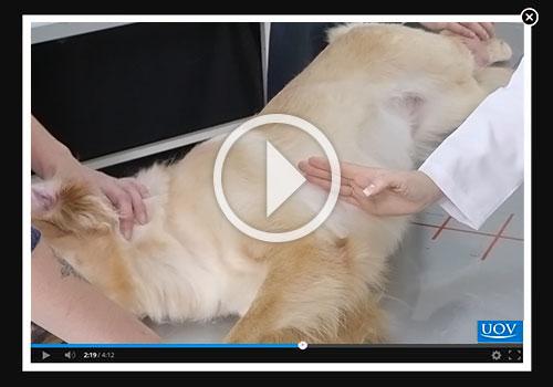 Diagnóstico por Imagem de Cães e Gatos