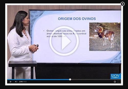 Ovinocultura - Produção e Principais Doenças