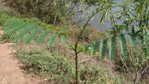 Reposição Florestal
