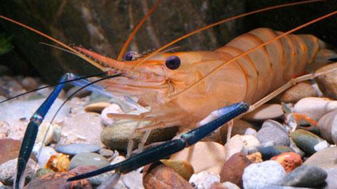 15 Cursos na Área Criação de Peixes