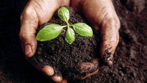11 Cursos na Área Jardinagem e Paisagismo