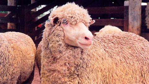 15 Cursos na Área Criação de Ovinos