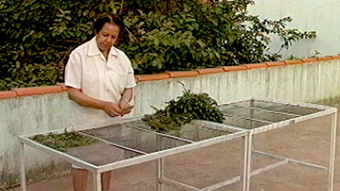 Uso de Plantas Medicinais em Dermatologia