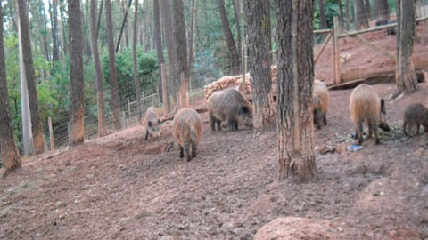 Abate e Comercialização de Animais Silvestres
