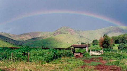 17 Cursos na Área Pastagens e Alimentação Animal