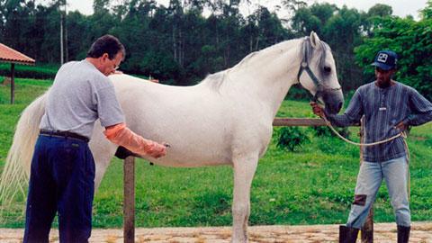 11 Cursos na Área Criação de Cavalos