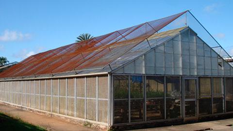 Cultivo Orgânico de Hortaliças em Estufa