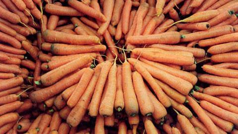 Cultivo Orgânico de Alho, Cenoura, Baroa, Beterraba e Batata-Doce