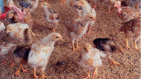 14 Cursos na Área Avicultura