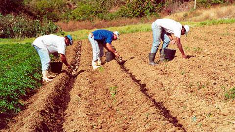 10 Cursos na Área Agricultura Orgânica