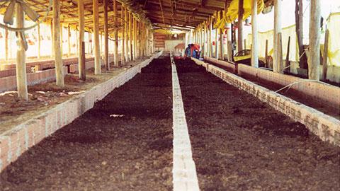 Criação de Minhocas para Produção de Farinha, Húmus e Matrizes