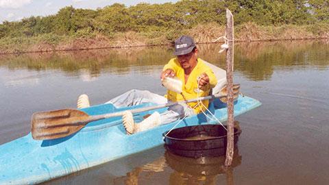 Cultivo de Camarões Marinhos