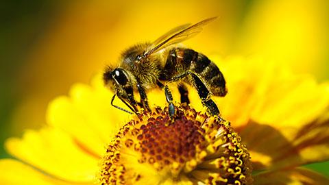 9 Cursos na Área Criação de Abelhas