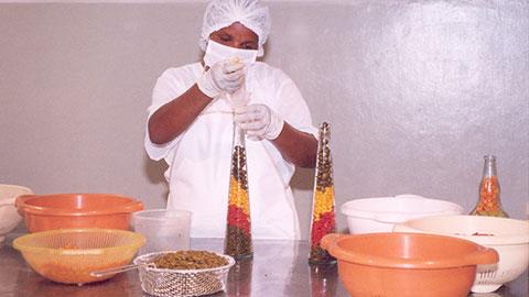 Produção e Processamento de Pimenta