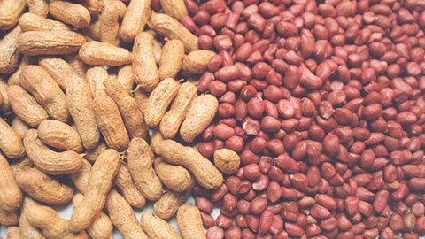 Produção de Amendoim de Qualidade