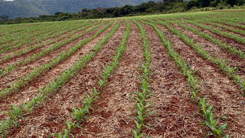 Formação de Pastagens com Plantio Direto