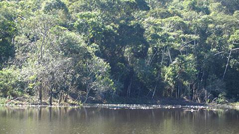 Restauração Florestal em Áreas de Preservação Permanente e Reserva Legal