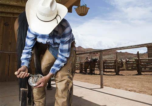 Curso de Correção de Aprumos e Ferragem de Cavalos
