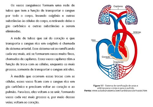 Drenagem Linfática Manual 4