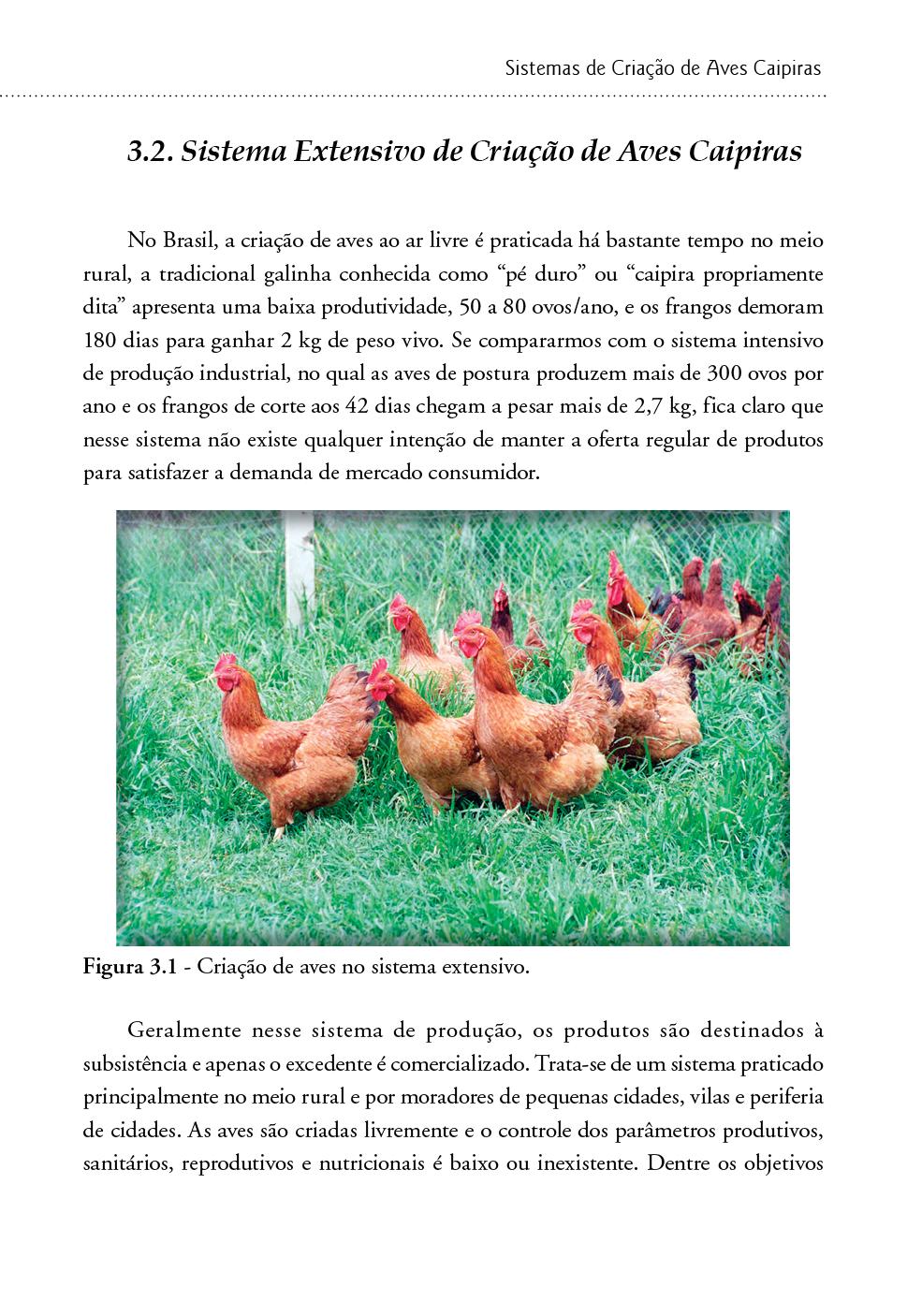 Criação de Frango e Galinha Caipira: sistema alternativo de criação de aves