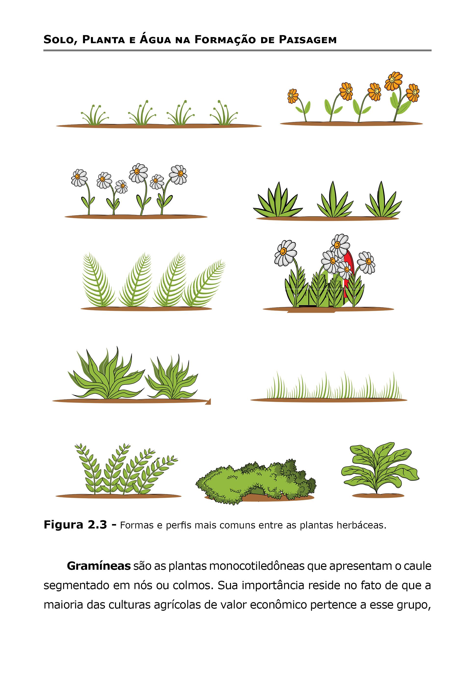 Solo, Planta e Água na Formação de Paisagem