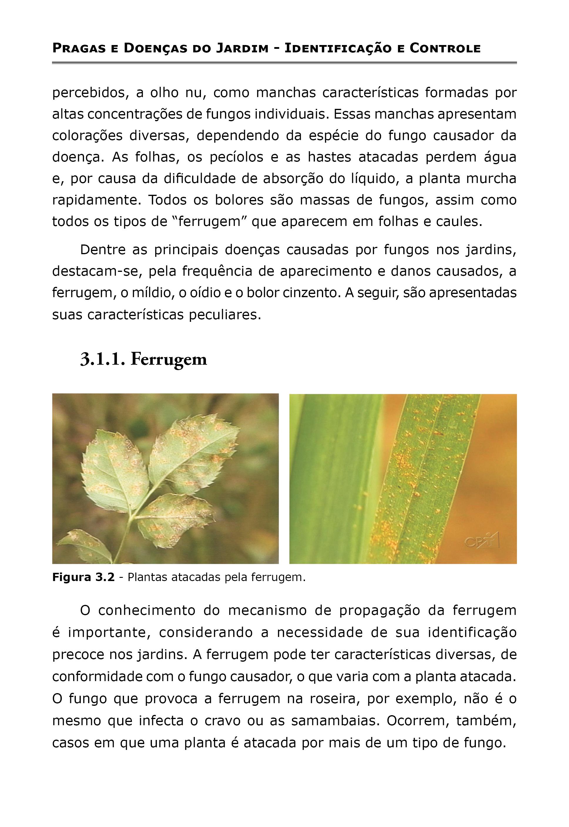 Pragas e Doenças do Jardim Identificação e Controle