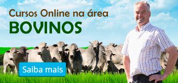 Conheça os Cursos Online da área Bovinos