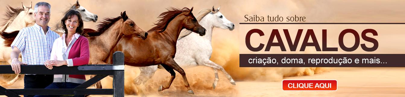 Saiba tudo sobre cavalos - Criação, doma, reprodução e mais...