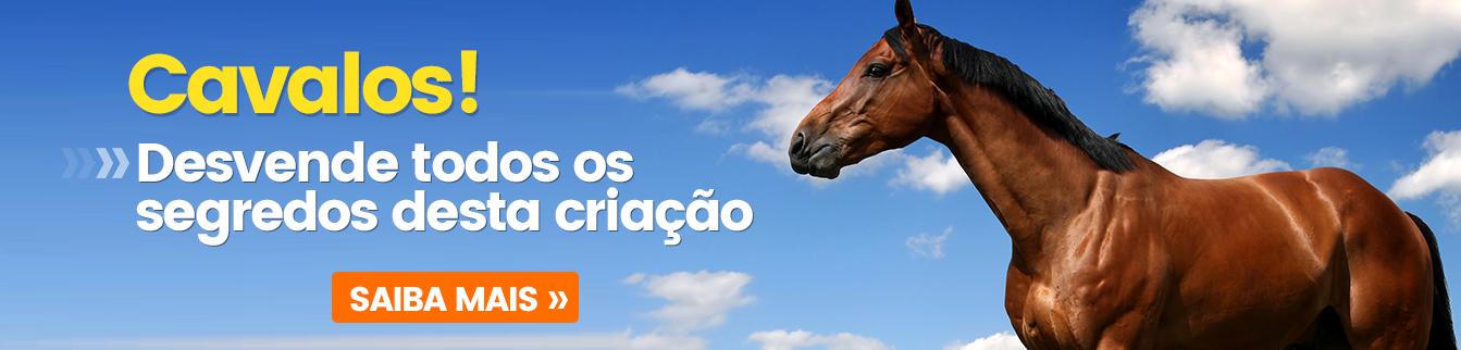 Cavalos! Desvende todos os segredos dessa criação
