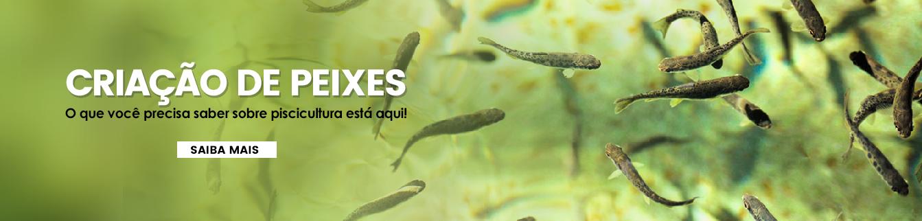 Criação de Peixes! Tudo que você precisa saber sobre piscicultura está aqui!
