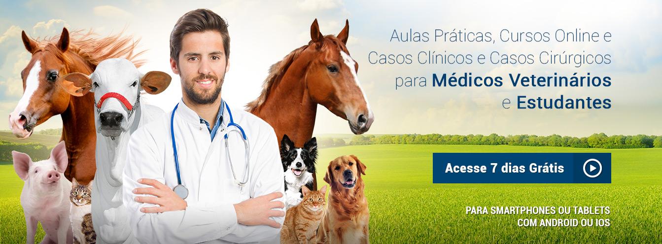 Aulas práticas e cursos online para o Médico Veterinário e Estudantes