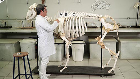 Princípios Gerais da Anatomia Animal