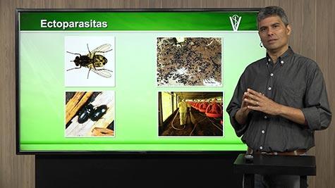 Doenças Fúngicas e Parasitos