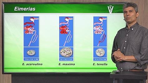 Aves Domésticas - Produção e Principais Doenças