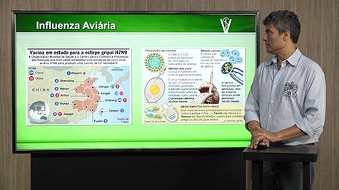 Doenças Virais - Gripe Aviária e Newcastle