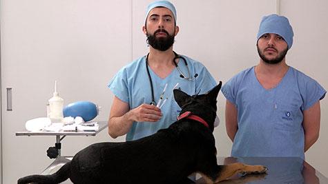 Medicação Pré-Anestésica em Pequenos Animais