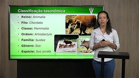 Origem, Classificação, Anatomia e Fisiologia do Suíno